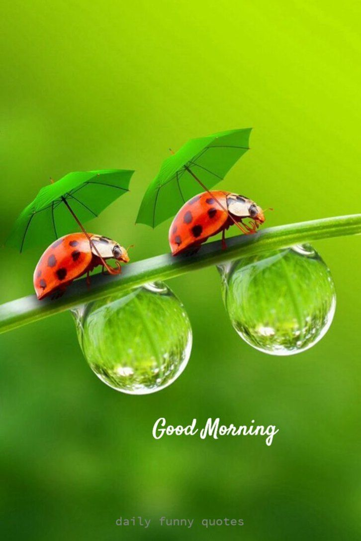 38 Inspirational Good Morning Quotes with Beautiful Images 21