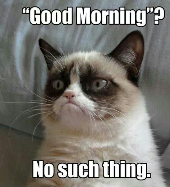 Bad Morning Funny Grumpy Cat Memes Grumpy Cat Quotes Grumpy Cat Meme