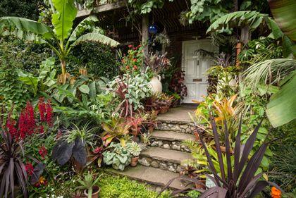 Will giles exotic garden in england google image result for Jungle garden design ideas