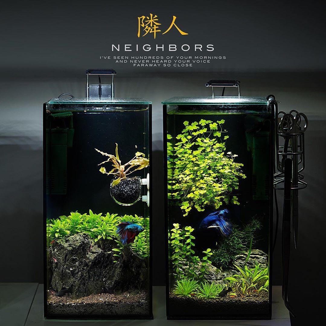 Fishtanks Aquarium Aquarium Landscape Led Aquarium Lighting