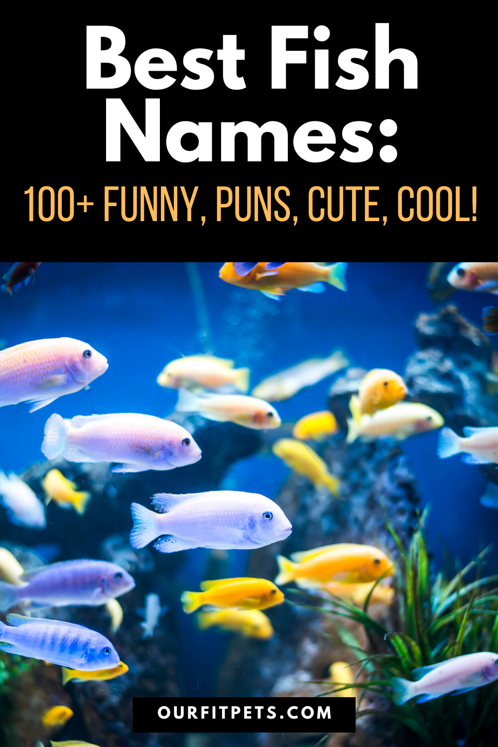 Best Fish Names 100 Funny Puns Cute Cool Our Fit Pets In 2020 Fish Puns Cat Advice