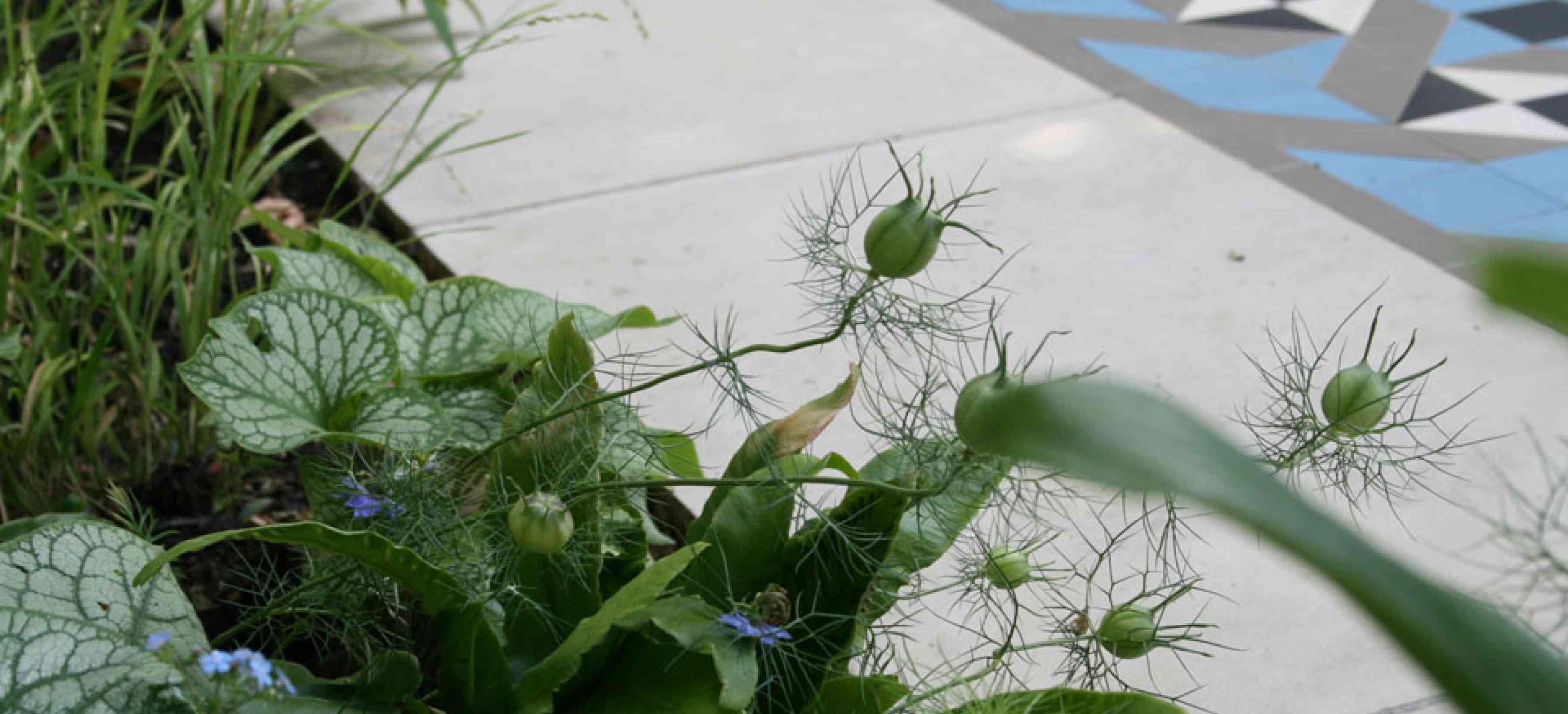 West London Front Garden - thumbnail