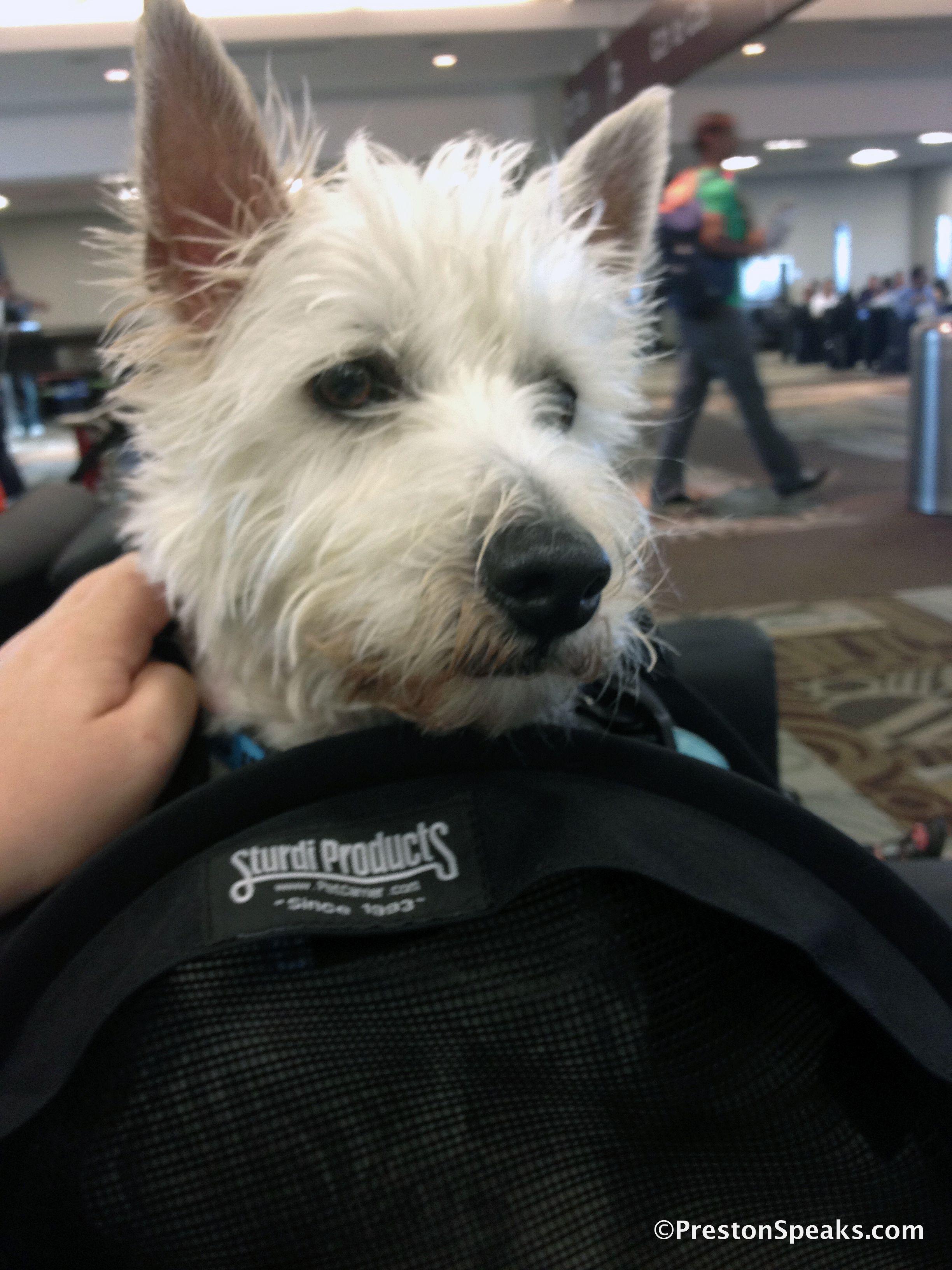 I Love My Travel Bag Www Prestonspeaks Com Westies Cute Dogs Dogs Puppies
