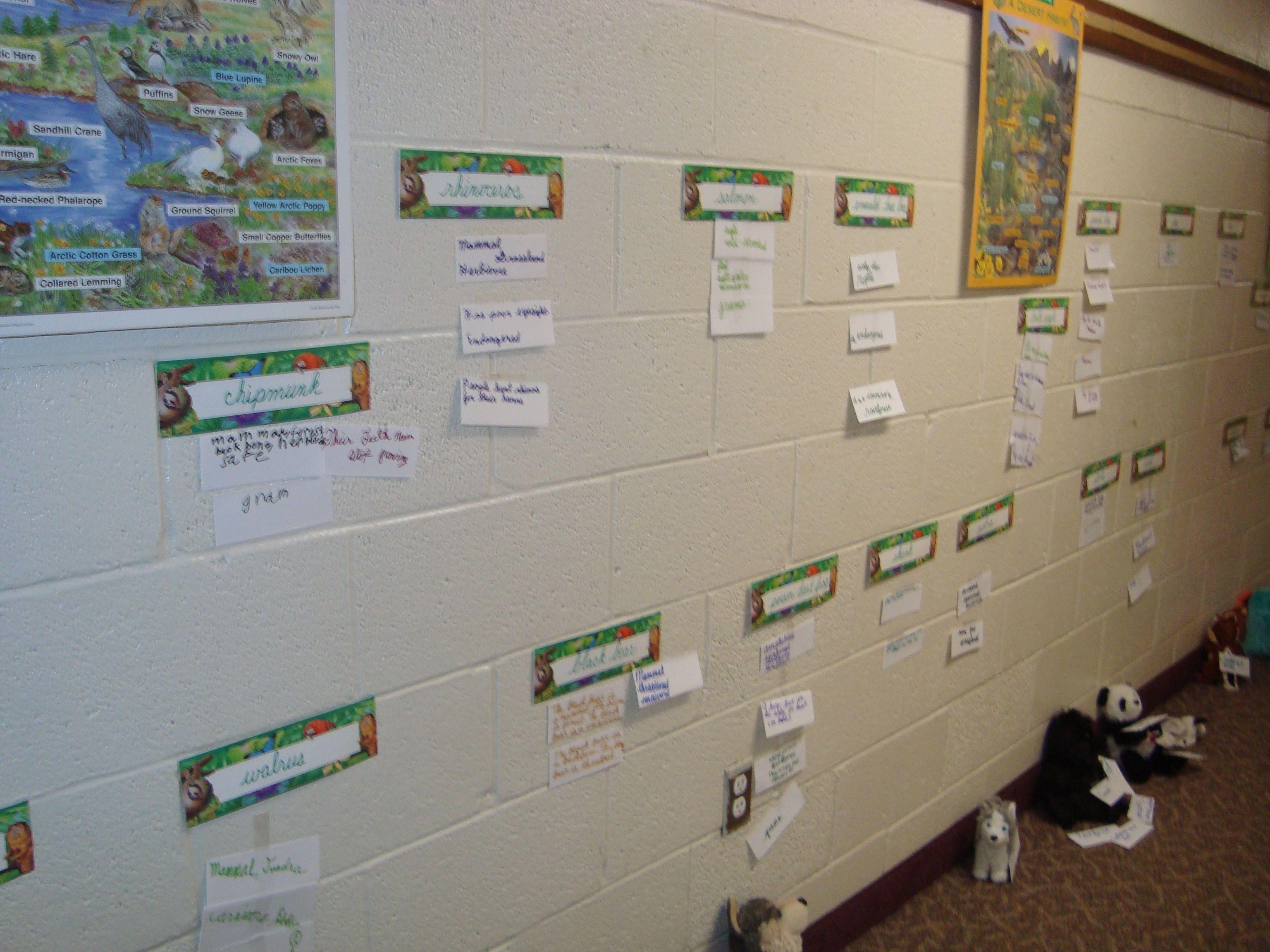 Vertebrate Worksheet For 4th Grade