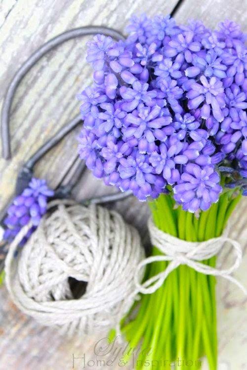 """il fiore del muscari (il """"lampascione"""" in Puglia) lo adoro!"""