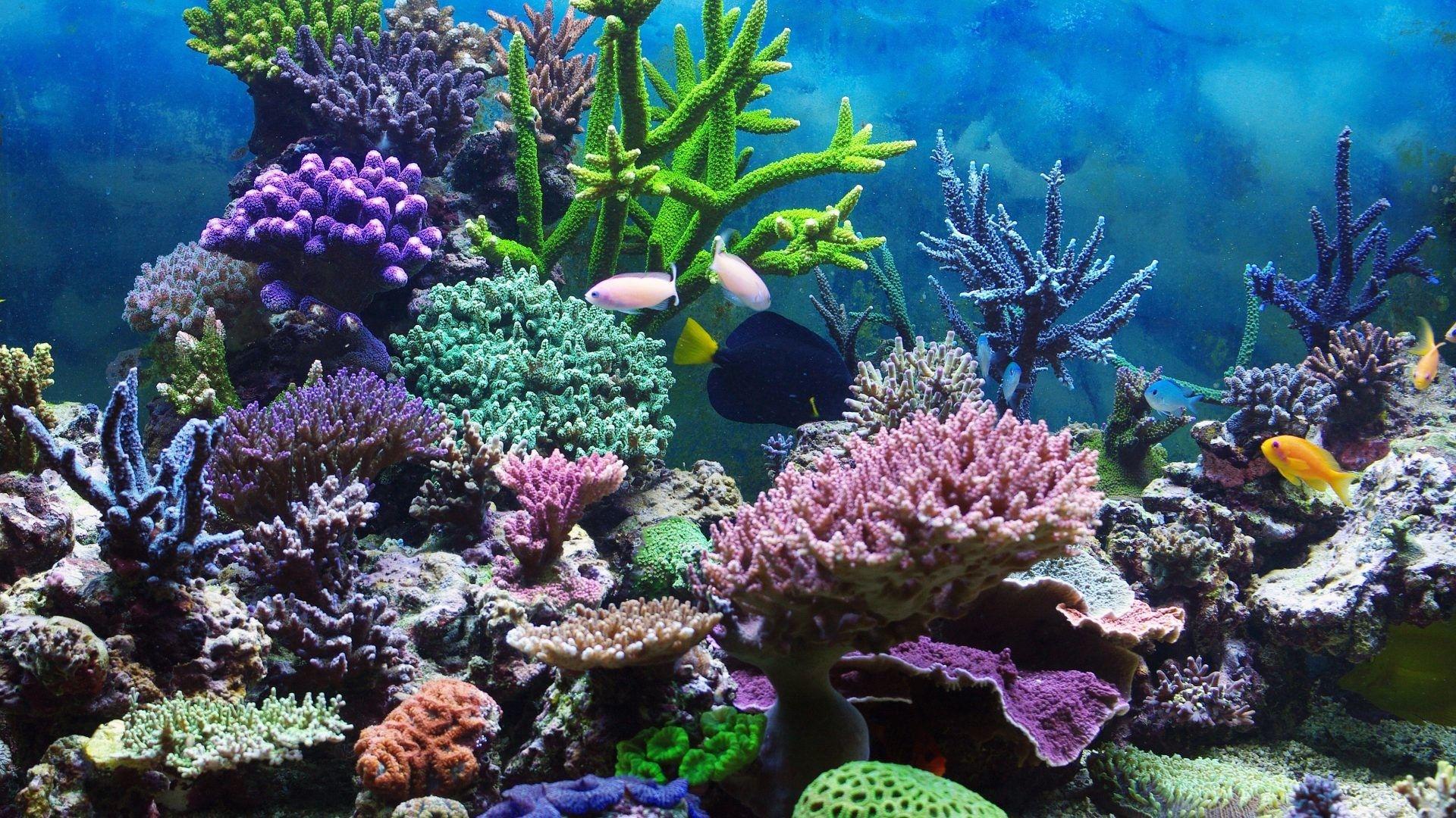 Res Underwater Coral Reef Ocean Tropical