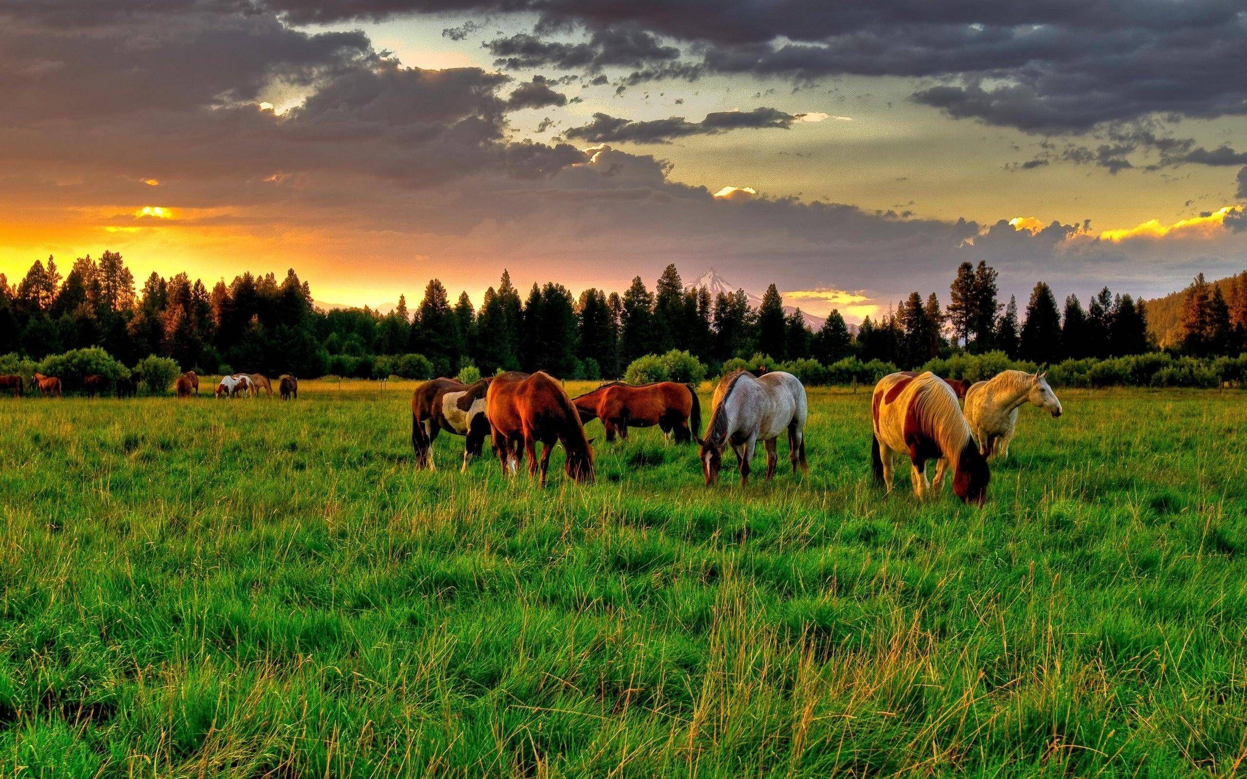 Animalsgrass Animals Grass Brown Horses X Wallpaper Horse Wallpaper Horses Beautiful Horses