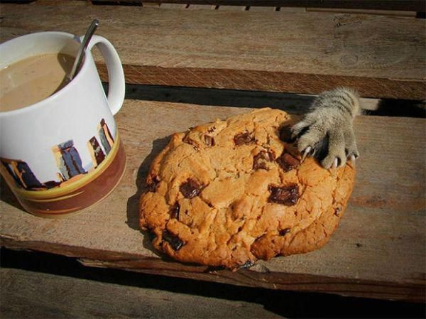 Cats caught red pawed stealing (23 Photos)