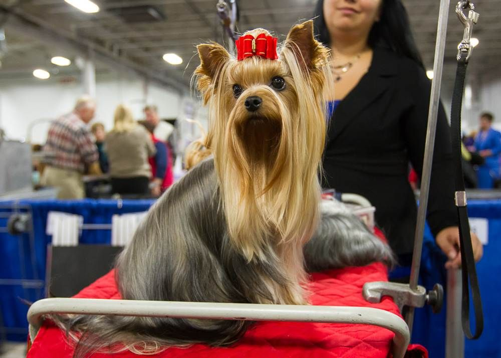The National Dog Show Behind The Scenes The National Dog Show