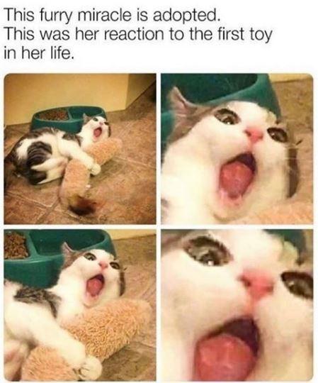 Celebrate Caturday In A Major Way (50 Cat Memes)