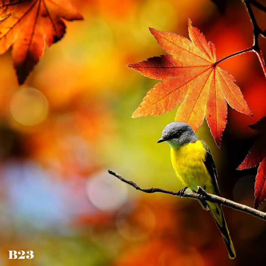 AUTUMN TRANSFORMING BEAUTY | Flickr - Photo Sharing!