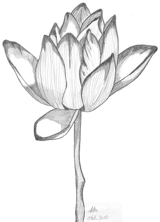 Bleistiftzeichnung Fertige Schattierung Basteln Zeichnen