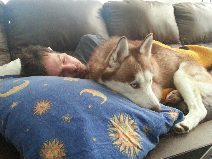Resultado de imagen para husky cuddle