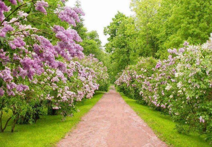Bahar Aylarının Müjdecisi çiçek Açan Ağaçlar Gönlünüzün Yaylarını