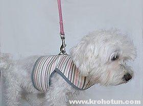 Шлейка своими руками для собаки: пошаговая инструкция