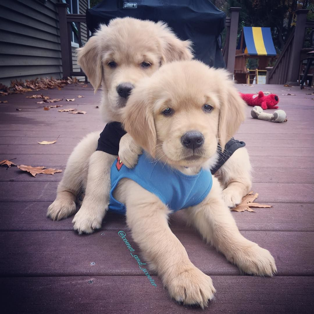 This One Will Forever Be One Of My Favoritepuppyphoto I Tag My