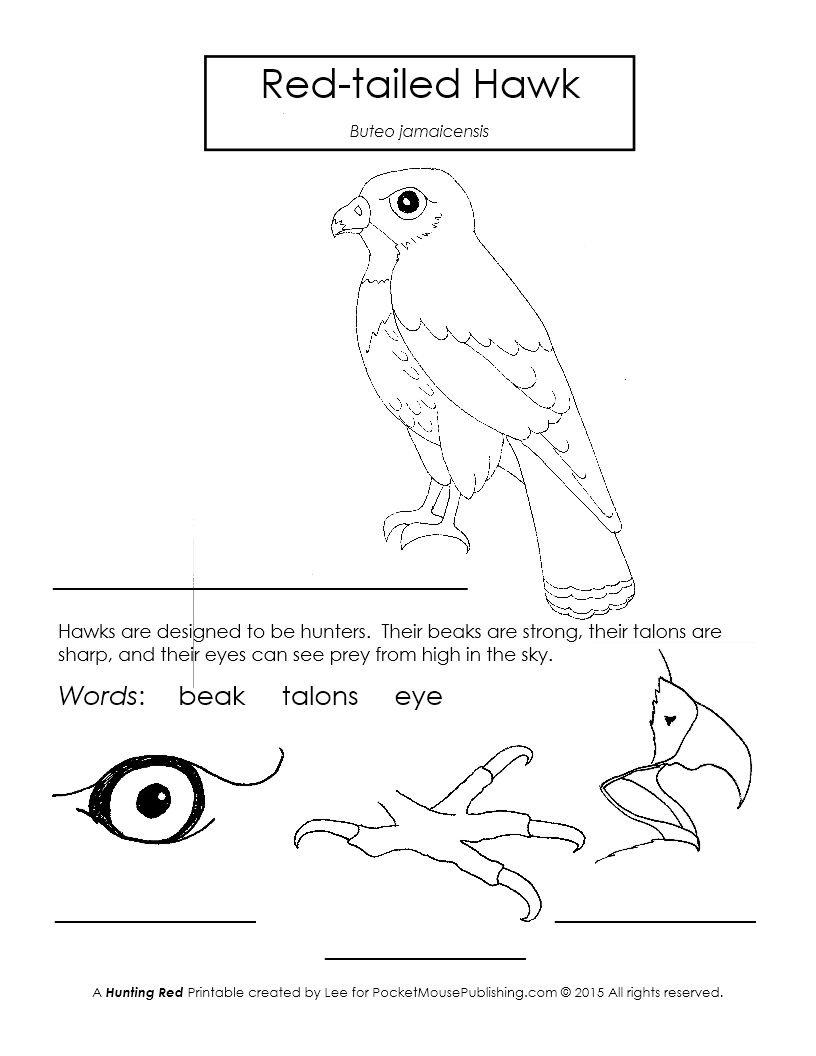 Bright Sky Six Red Tailed Hawk Printable Worksheet Red Tailed Hawk Animal Flashcards Camping Art [ 1056 x 816 Pixel ]