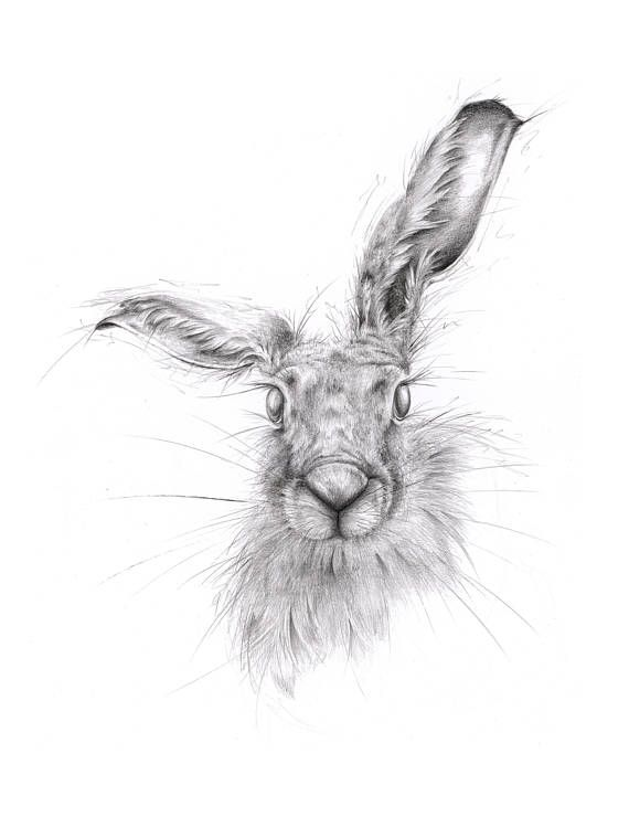 Limited edition giclee hare art print ears giclee print drawings and drawing ideas