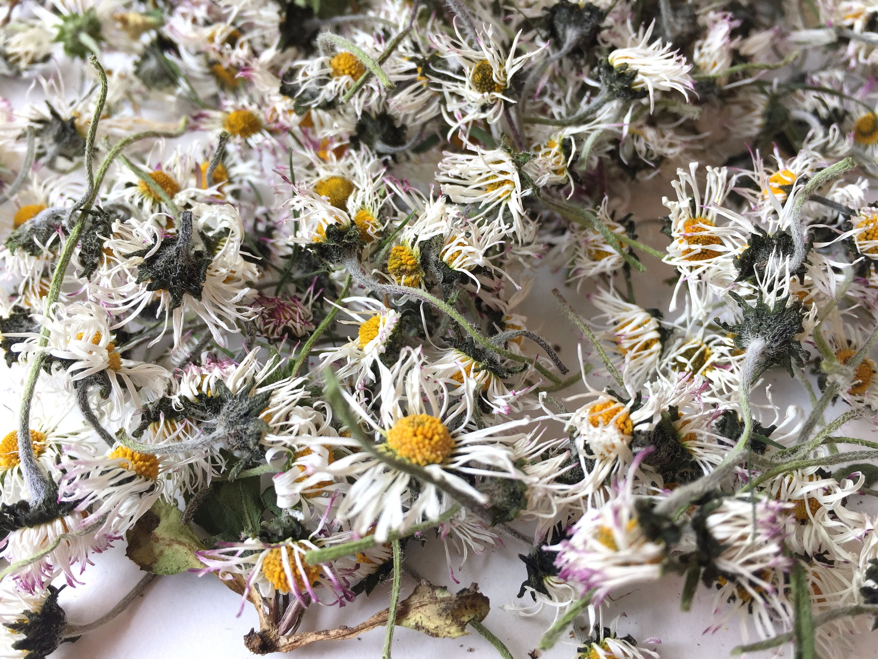 8 Grams Of Natural Dried Daisy Flowers Over 300 Flower Heads