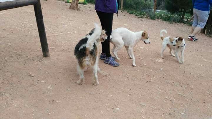 Silver, Robin, Luly en el parque canino 04/16