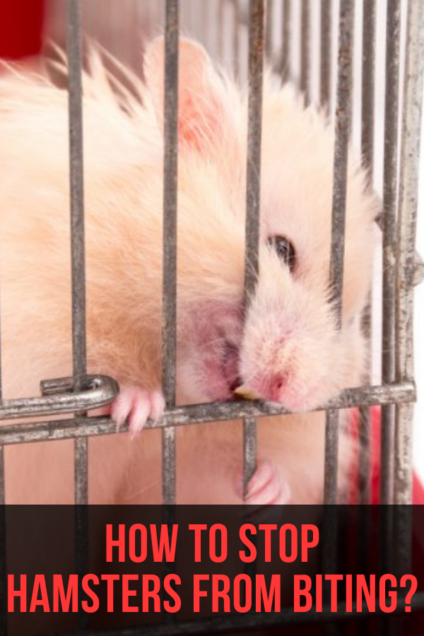 e7c4f3f3bf334106583b054e0804eea6 - How To Get My Hamster To Stop Biting His Cage