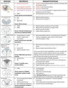 Spinal Card Lesion Cheat Sheet #exercise21humanreflexphysiology
