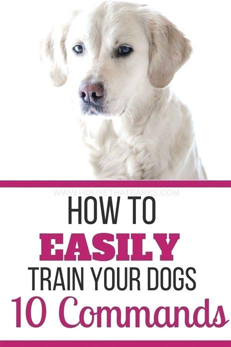 Dog Training Bells Potty Dog Training Quiet Dog Training 4 Year
