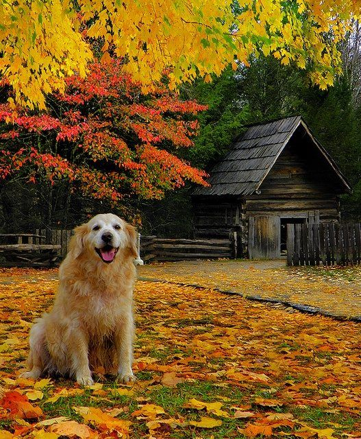 lucky dog Dogs, Beautiful fall, Scenery