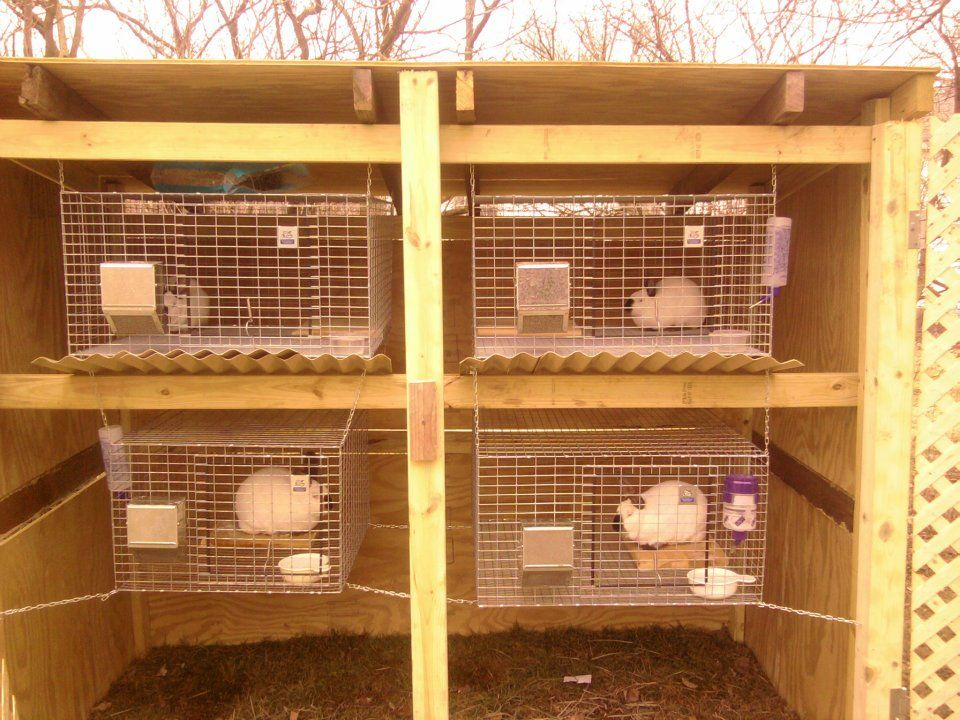 Meat rabbits.   Meat rabbits, Rabbit hutches, Rabbit cages