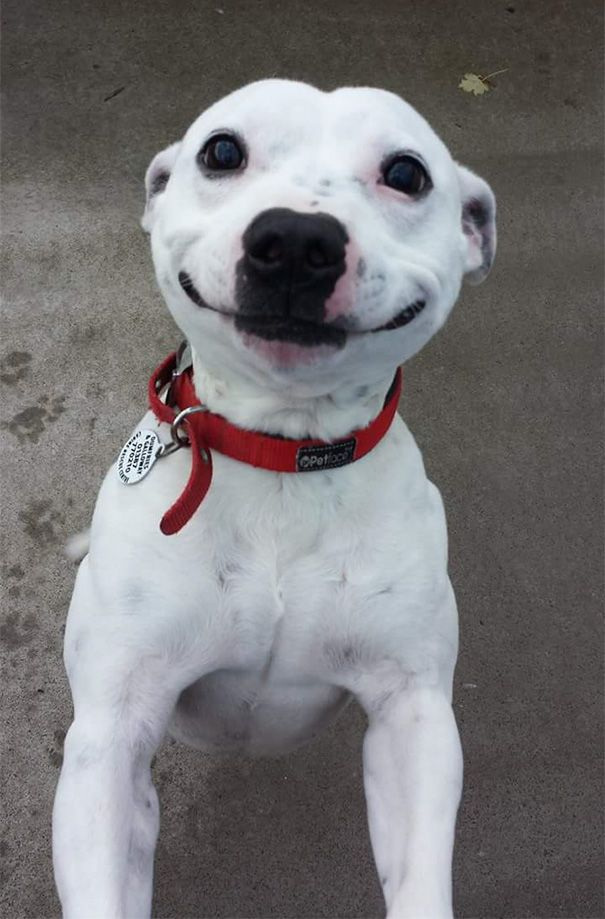 Cool Dogo Chubby Adorable Dog - e7c627be4b0ee409195cf9084174b312  Perfect Image Reference_155028  .jpg