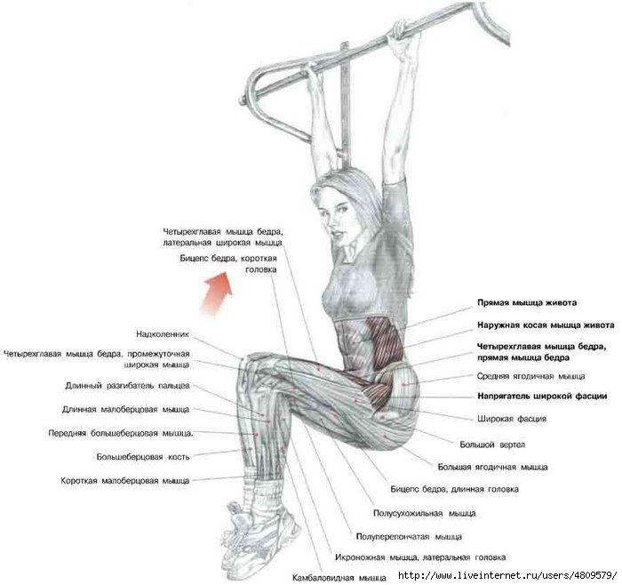 Press_shema_5.jpg (700×658) Тренировки мышц живота Упражнения Тренировки