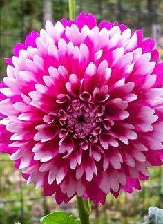 Beautiful flowers pinterest flowers beautiful mightylinksfo