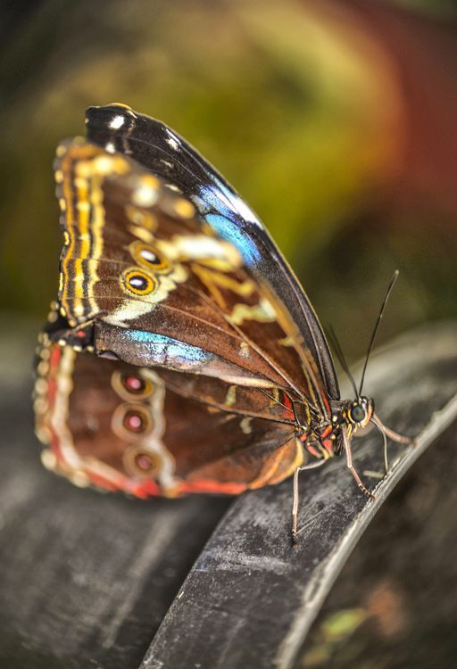 butterfly... Photo by Stanley P. — National Geographic Your Shot