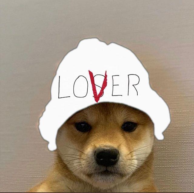 Elijah Lawes On Instagram Dogwifhatgang In 2020 Dog Icon Dog Images Dog Memes