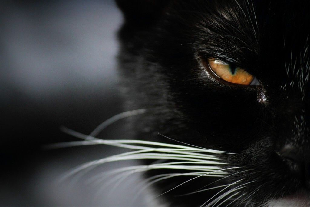 Angry Black Cat Eye Close Up Wallpaper