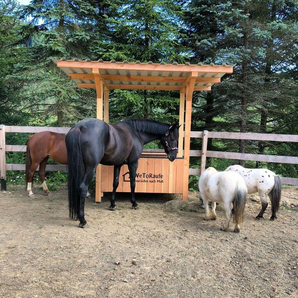 Pferde Ebay Kleinanzeigen