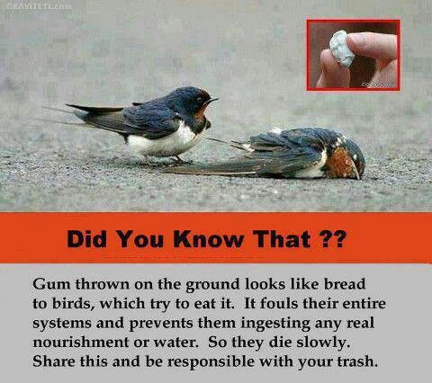 Gum :/ yet another reason I stay away from it!