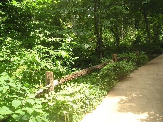 A Walk Through Cleveland's Botanical Garden: Woodland Garden