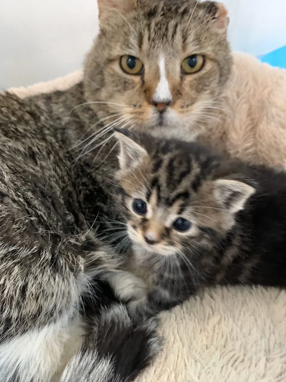 Rescued Kitten Won T Stop Crying Until Grandpa Cat Takes Her Under His Wing Love Meow En 2020 Gatos Bebe Historia