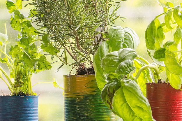 Grow Your Own Herbs At Home With This Life Hack Garden Hacks Diy
