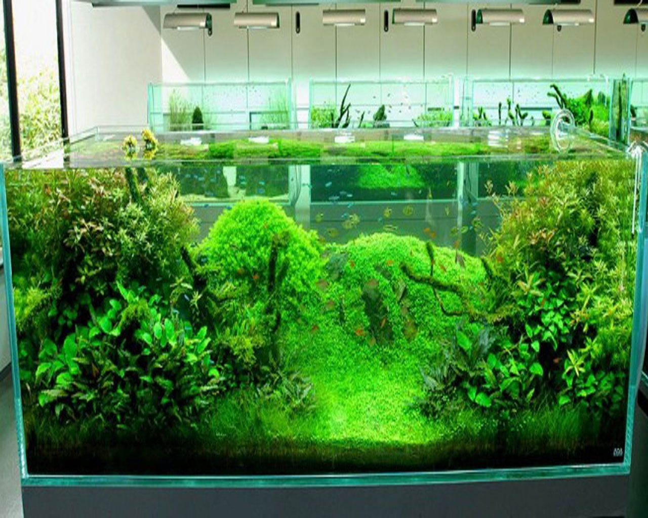 this would be great with some algae bottom feeders | it\'s a fishy ...