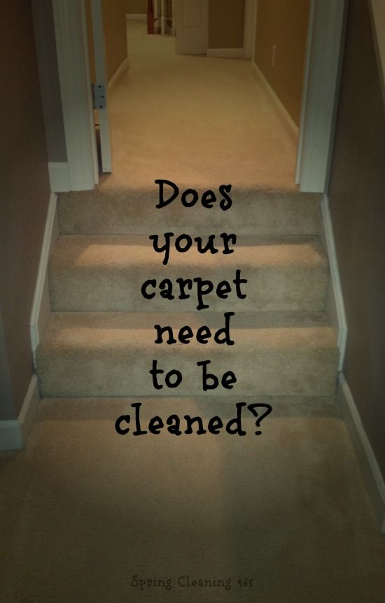 When To Spot Clean Rent A Carpet Cleaner Call In A