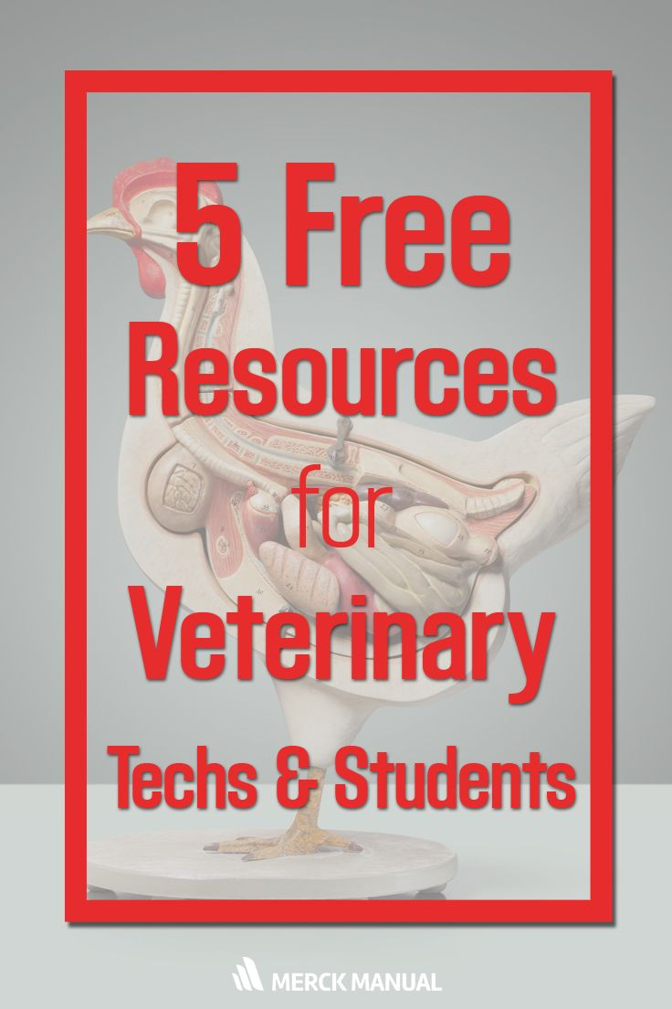 Make studying easier with these 5 resources. | Animal Studies | Pinterest |  Easy, Tech and Veterinary medicine
