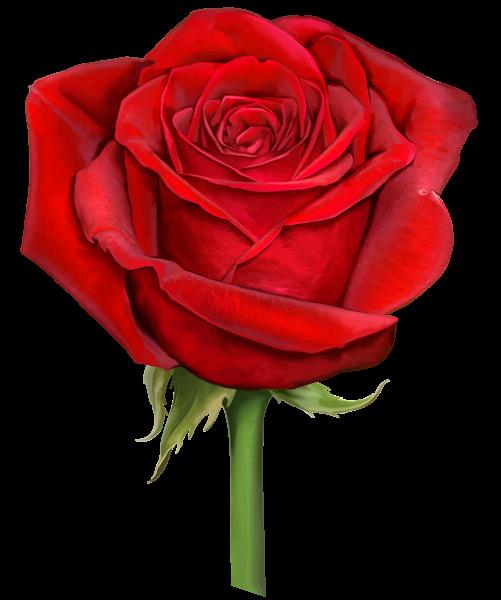 Red Rose Transparent Png Clip Art Red Rose Drawing Rose Flower Png Red Roses