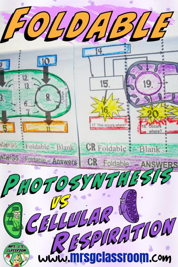 Photosynthesis Cellular Respiration Cellular respiration