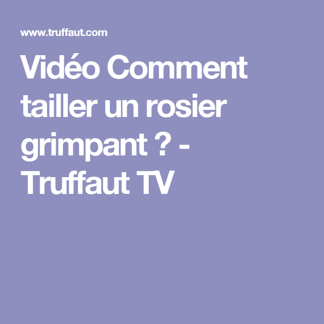 Best 20 comment tailler un rosier ideas on pinterest - Comment tailler un rosier grimpant ...