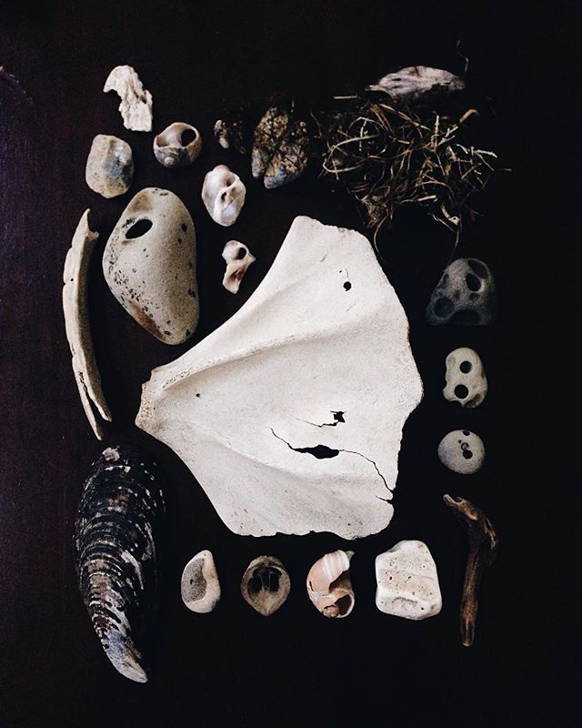 Sea wings and holey stones. Remnants found at the beach. Wildthorne Instagram. Nature collections. Ocean flotsam