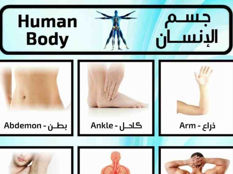 تعلم اسماء اعضاء جسم الإنسان باللغة الانجليزية وبالصور صورة ٢ English Language Language Body