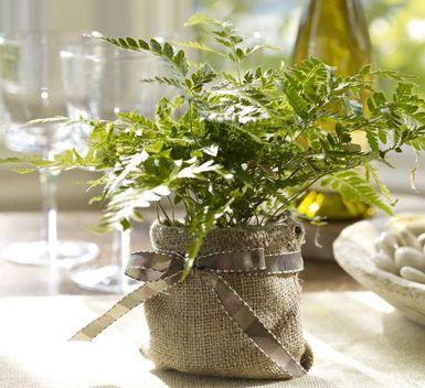 Wrap your pots in burlap!