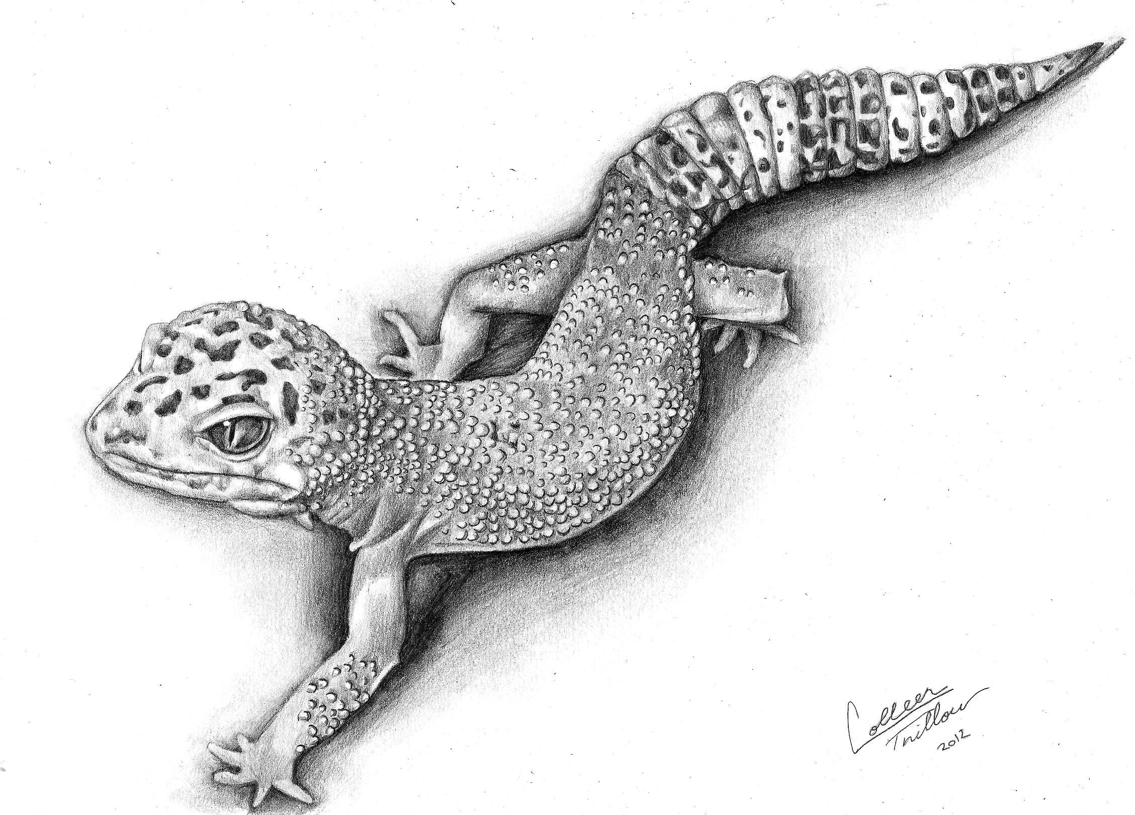 i have one of these he the cutest thing leopard gecko drawing